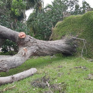 Storm Damage Clean up after Hurricane Matthew...