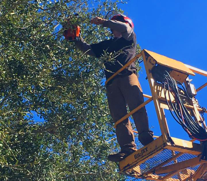 Sunstate Tree Services in Melbourne, FL